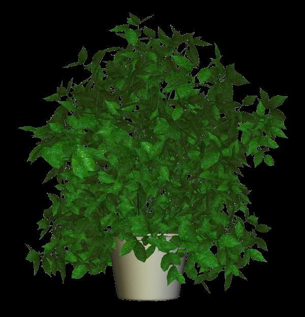 tube plante arbuste en pot