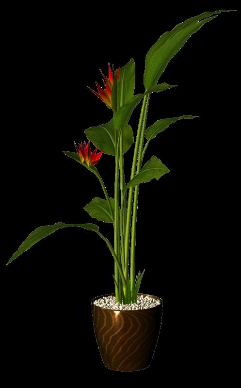 tube plante arbuste en pot page 7. Black Bedroom Furniture Sets. Home Design Ideas