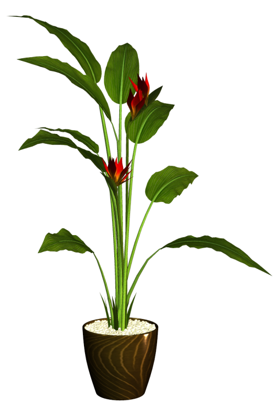 Tube plante arbuste en pot for Plante hivernale en pot